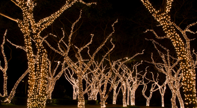 Lights | P R O T U R F   Louisville Ky Landscaping, Commercial Residential